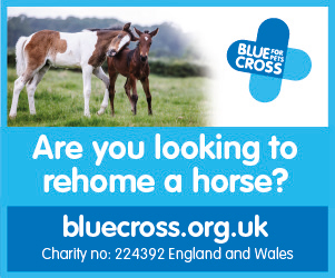 Blue Cross 2020 B (Worcestershire Horse)